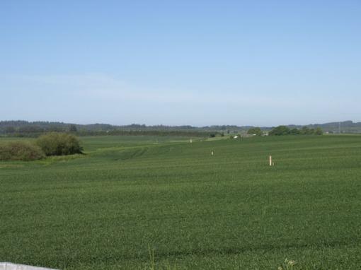 Motorvejstracéet set mod vest fra Mollerupvej. Træpælene markerer Vejdirektoratets boreprøver og står nogenlunde midt i vejtracéet