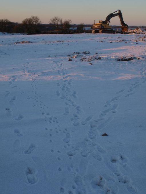 Udgravningsfeltet en december morgen, med dyrespor i sneen